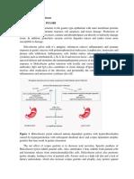 Etiology of Peptic Ulcer Disease