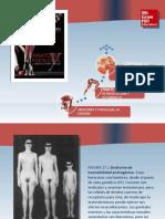 Saladin Anatomia 6a Diapositivas c27 AP REP MASCULINO