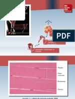 Saladin Anatomia 6a Diapositivas c11 TEJIDO MUSCULAR