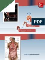 Saladin Anatomia 6a Diapositivas c25 APARATO DIGESTIVO