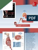 Saladin Anatomia 6a Diapositivas c10 SIST MUSCULAR