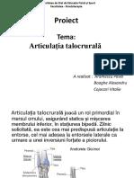 Articulația talocrurală (1)