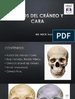 Huesos del cráneo y de la cara