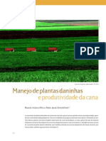 Cana Producao Vegetal03