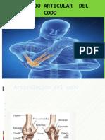 Articulacion-Humero-Rdial-y-Cubital..pptx