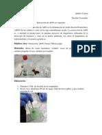 Extraccion de ADN en vegetales..docx