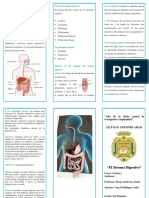 139354858 Triptico Sistema Digestivo
