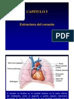 CAPITULO 5.2 Estructura Corazon