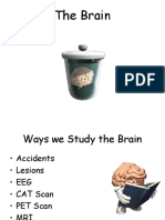 neuro lesson 6