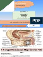 Patofisiologi Reproduksi Tampil Ppt