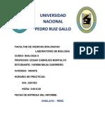 Informe_1-_BIO.docx
