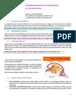 Tema 2.mecanismos basicos de funcionamento del riñón