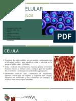 Función celular.pptx