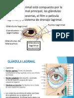 glandula lagrimal