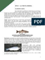Pesca Nei Laghetti e Cucina Della Trota Iridea