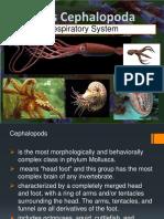 Class-Cephalopods.pptx