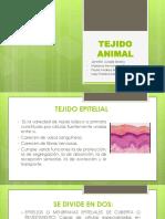 Tejido Animal Ct