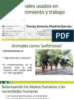 13. Animales de Entretenimeinto y Trabajo