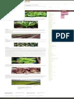 Como Plantar Alface _ Hortas.info