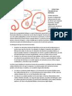 Estructura Terciaria de Las Proteínas