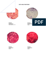 DHP Isolasi&Identifikasi Mikroorganisme