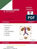 Xiii.- Anatomia y Fisiologia Del Sistema Urinario