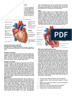 An-Introduction-to-the-Cardiovascular-System (1).docx