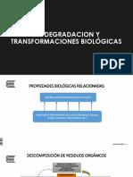 13. Bioremediacion