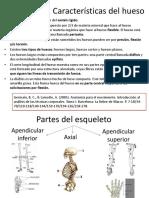 Los Huesos Articulaciones y Tipos de Movimiento