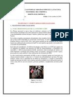 Consulta 1. Telefonos especializados.pdf