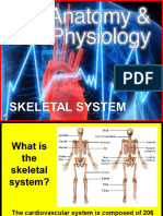 173-Anatomy-skeletal.ppt