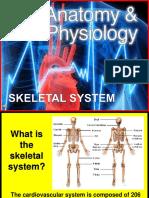 173-Anatomy-skeletal.ppt