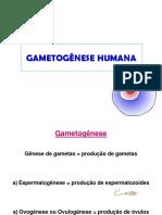 Gametogênese Humana