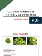 Diapositivas morfologia vegetal