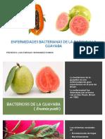 Enfermedades Bacterianas de La Papaya y La Guayaba