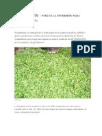 Negocio Verde - YERBA MATE