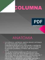 Clase 6 - Columna