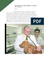 Rol Del Veterinario en La Vida Animal