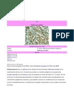 Influenzavirus A