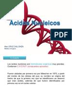 Ácidos nucléicosxd