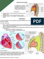 resumo de anatomia digestoria