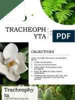 tracheophytareport-190324095338