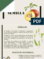 semillaa
