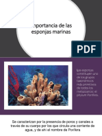 Importancia de Las Esponjas Marinas