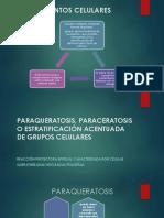 Paraqueratosis, Cito 2