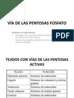 VÍA DE LAS PENTOSAS FOSFATO2019