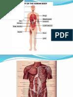 Anatomi Tubuh Yogya (1)