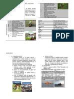 Actividades Economicas Pesca Mineria