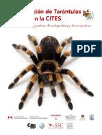 Identification Tarantulas Aphonopelma Brachypelma and Sericopelma Es