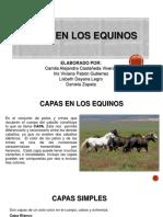 Capas en Los Equinos